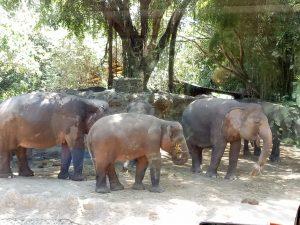 Mengenal Satwa Indonesia, India dan Afrika di Bali Safari & Marine Park