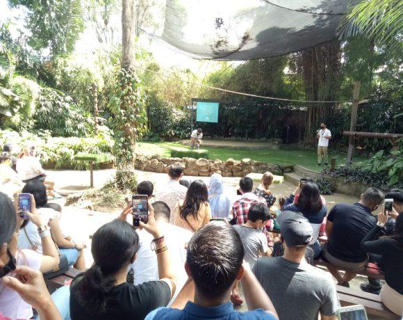 Yuk, Berwisata ke Bali Zoo